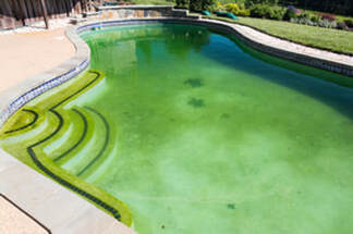 Picture of a pool with algae and green water.